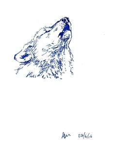 Monday 27-06-16. A howling wolf in blue gel pen. I've discovered I like drawing in blue.