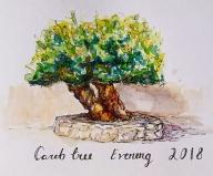 carob tree 2018