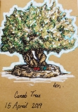 carob tree 2019